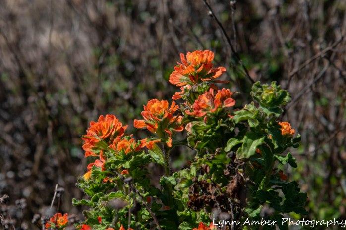 Point Lobos SNR (10 of 43)