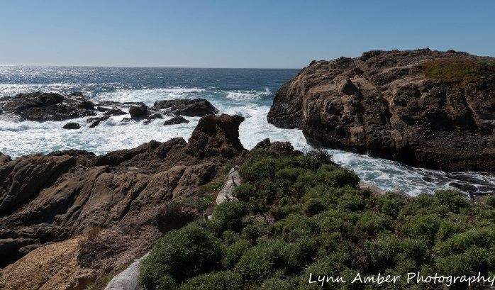 Point Lobos SNR (11 of 43)