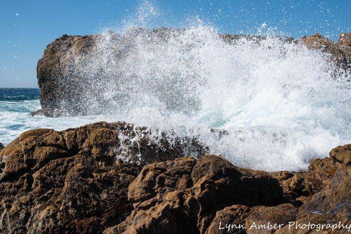 Point Lobos SNR (15 of 43)