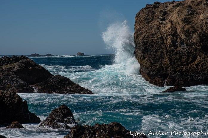 Point Lobos SNR (18 of 43)