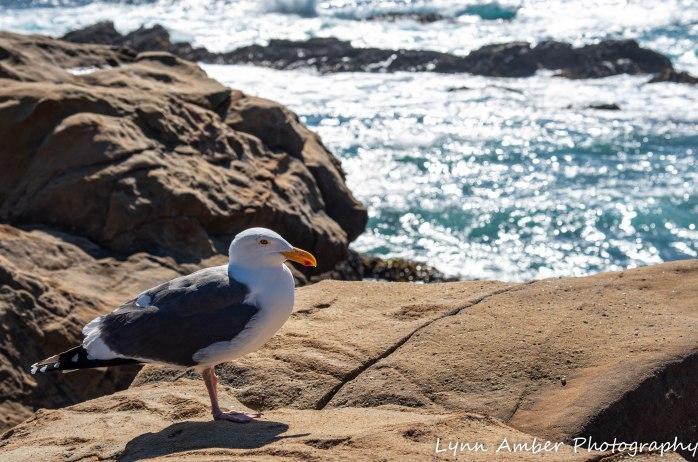 Point Lobos SNR (19 of 43)