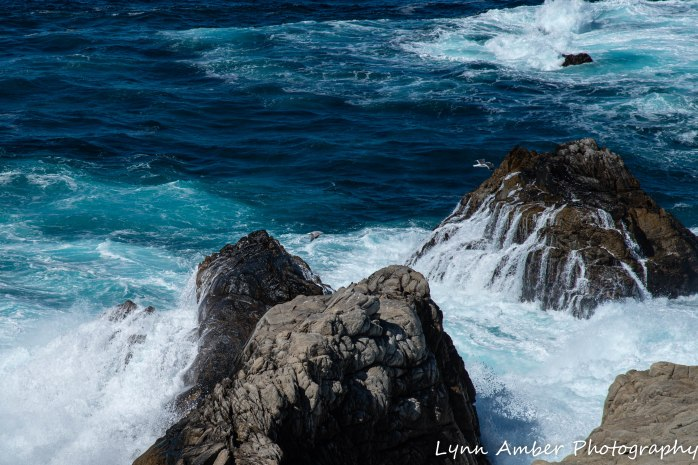 Point Lobos SNR (2 of 43)