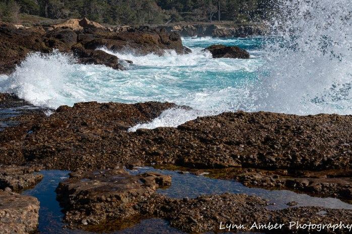 Point Lobos SNR (22 of 43)