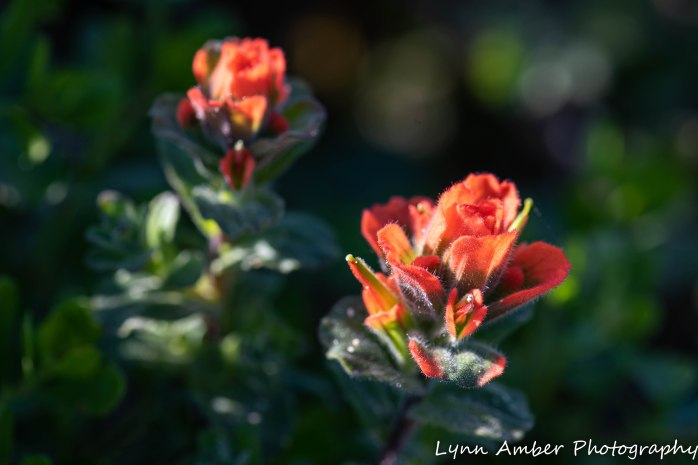 Point Lobos SNR (32 of 43)