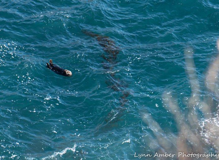Point Lobos SNR (33 of 43)