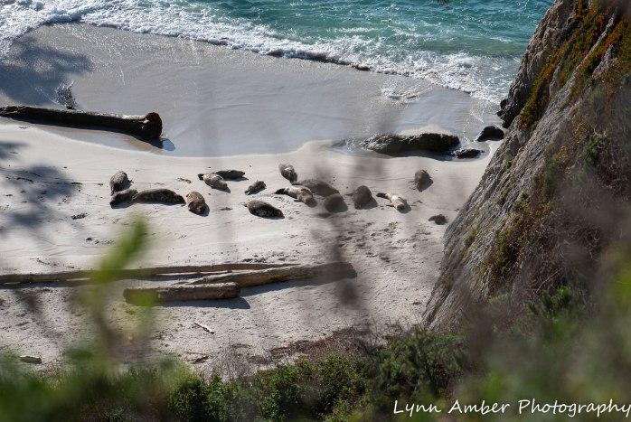 Point Lobos SNR (34 of 43)
