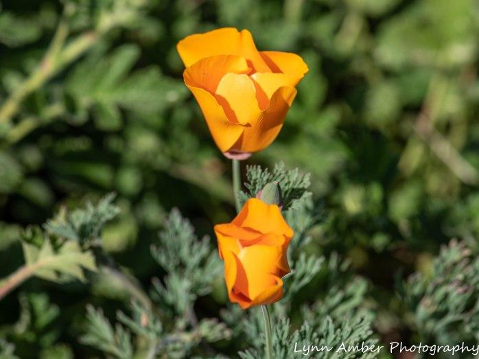 Point Lobos SNR (36 of 43)
