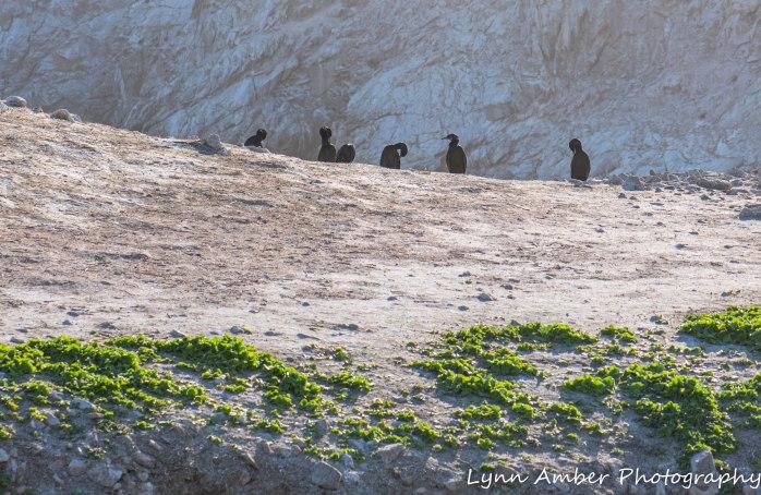 Point Lobos SNR (38 of 43)