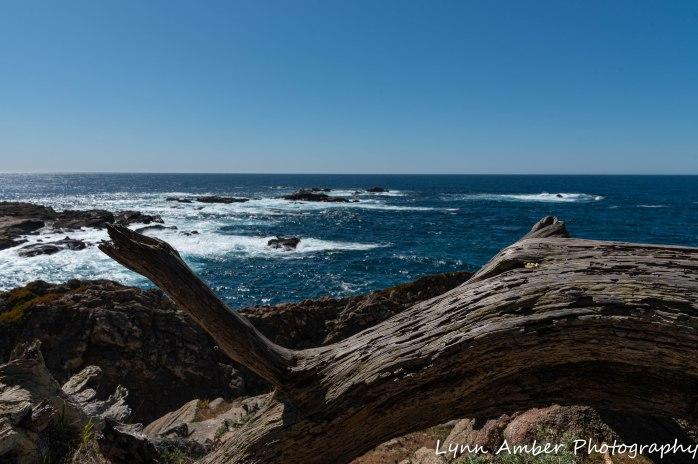 Point Lobos SNR (4 of 43)