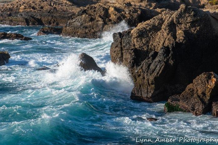 Point Lobos SNR (43 of 43)