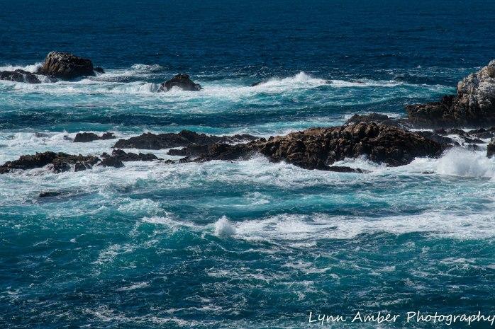 Point Lobos SNR (5 of 43)