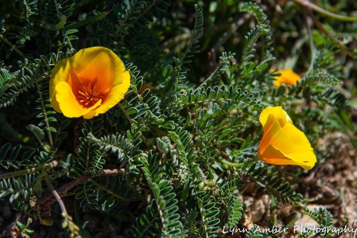 Point Lobos SNR (7 of 43)