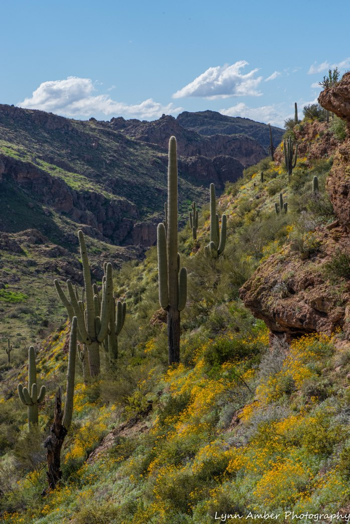 Superstition Mt hike and Fish Creek Hill (19 of 27)