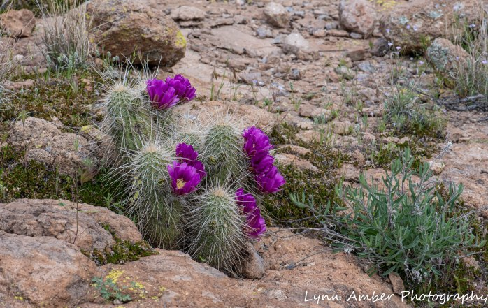Superstition Mt hike and Fish Creek Hill (7 of 27)