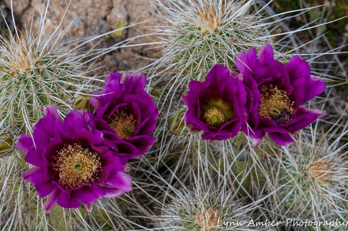 Superstition Mt hike and Fish Creek Hill (8 of 27)