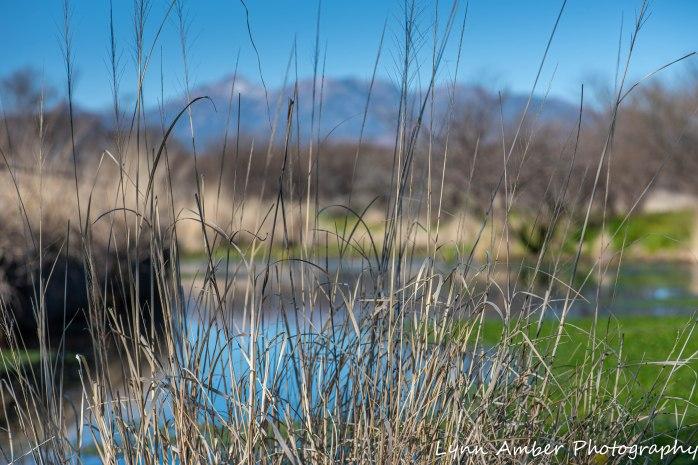 Cottonwood Pond 2