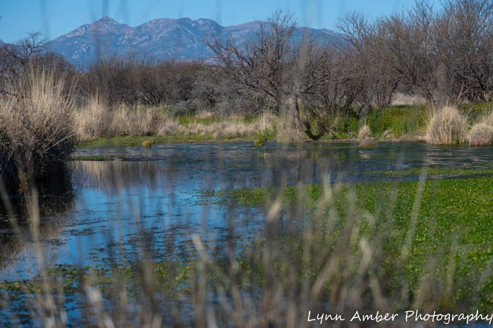 Las Cienegas pond (1 of 1)
