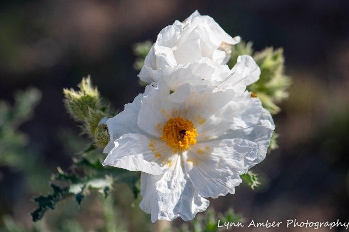 LCNCA flowers (3 of 4)