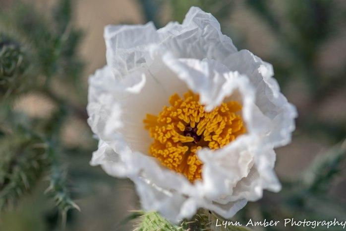 LCNCA flowers (4 of 4)