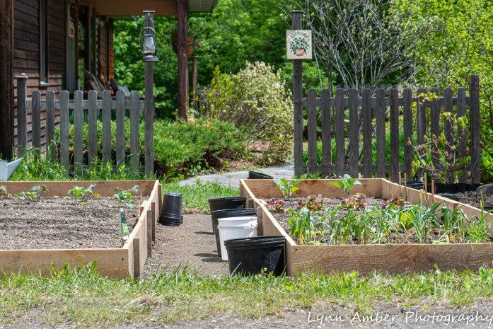 Vermont Garden (1 of 2)-2