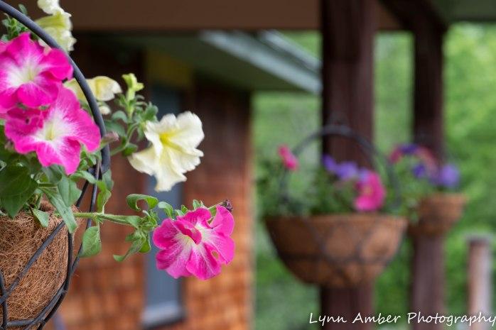 Vermont Garden (13 of 13)