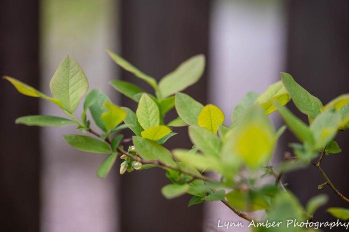 Vermont Garden (2 of 13)