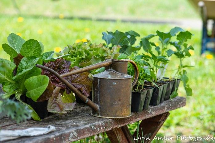 Vermont Garden (4 of 13)