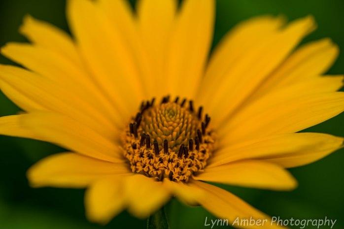 Garden flowers 7.9.20 (2 of 2)